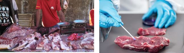 Molecular Chip for Identification of Illegally Smuggled Wildlife Bushmeat